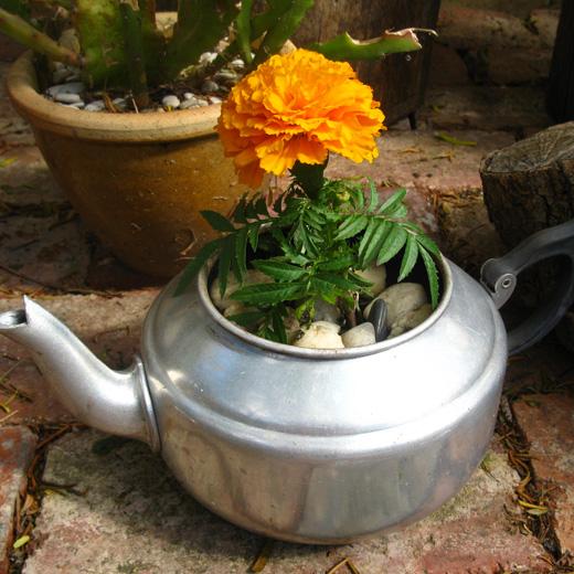 doniczka z czajnika