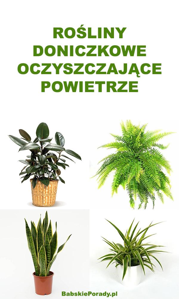 Rośliny doniczkowe, które oczyszczają powietrze z toksyn